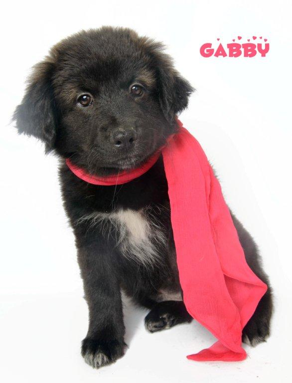 gabby_130112_dsc9853-copy