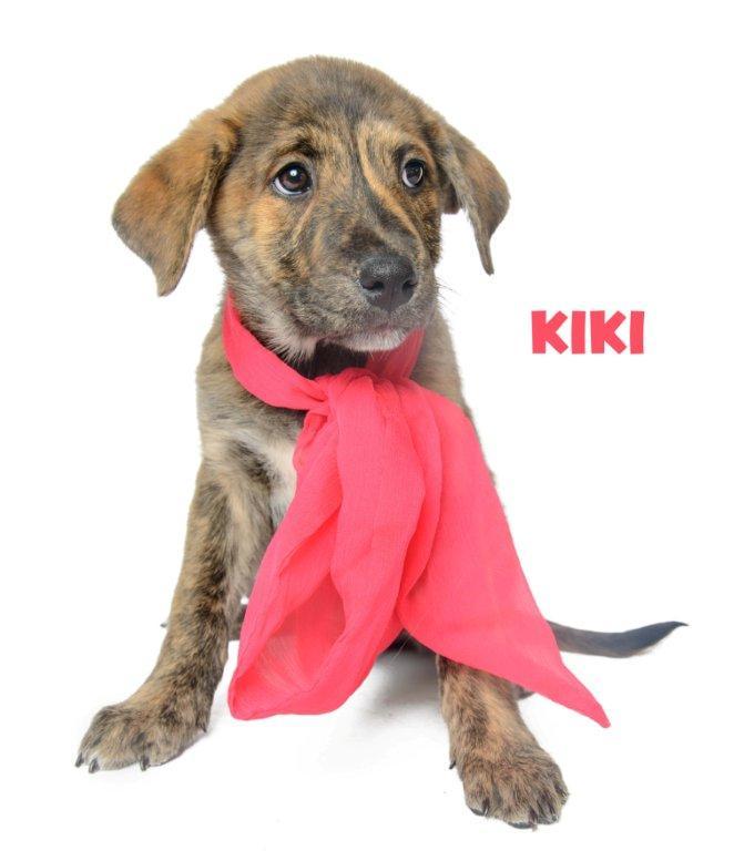 kiki_130112_dsc9770-copy