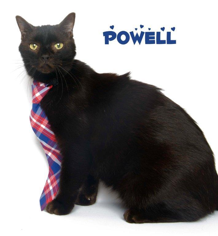 powell_130112_dsc8795-copy