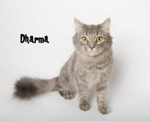 CO Dharma_121103_DSC8614
