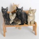 CO- coming soon kitties