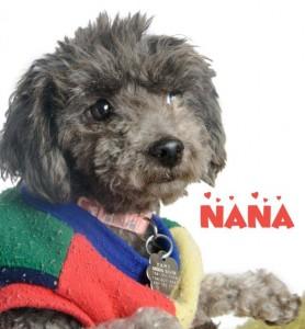 Nana_130112_DSC9606 copy