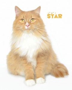 Star_130112_DSC8472 copy