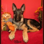 max 10-26-12 IMG_7498